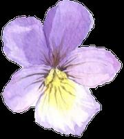flower-1920w-180w