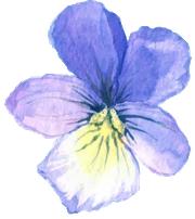 flower-left-blue