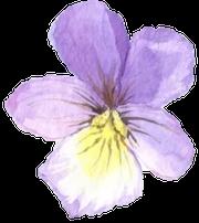 flower-left