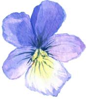 flower-right-blue